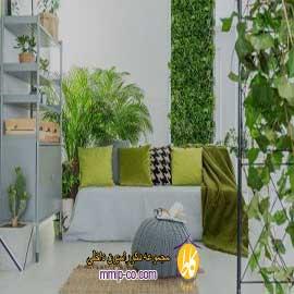 ۳ دلیل استفاده از گیاهان در طراحی داخلی