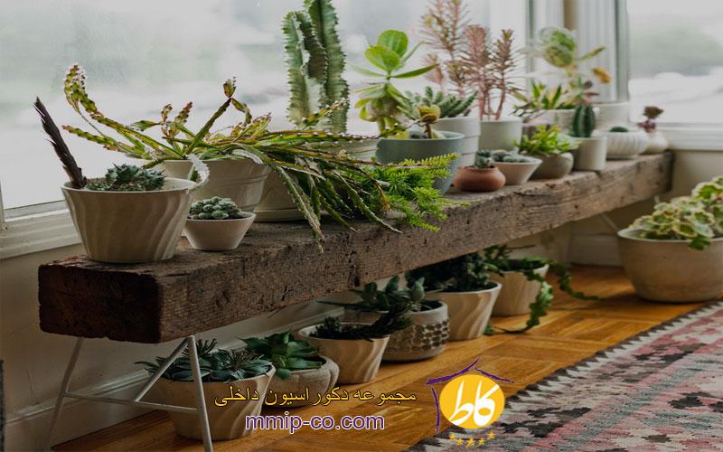 3 ایده برای زیباتر کردن منزل با گیاهان در طراحی داخلی