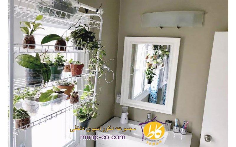 5 روش قرار دادن گیاهان در سرویس بهداشتی
