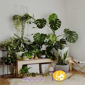 ۳ ایده برای زیباتر کردن منزل با گیاهان در طراحی داخلی